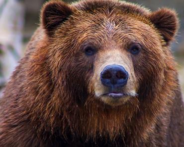 Man Dies After Crashing Motorcycle Into Bear